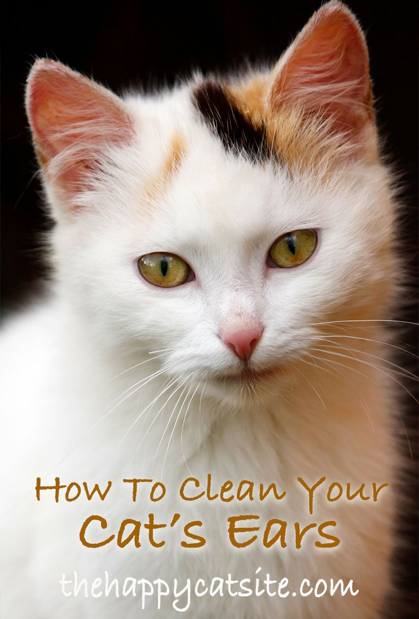 How to clean cats ears a step by step guide cat ears