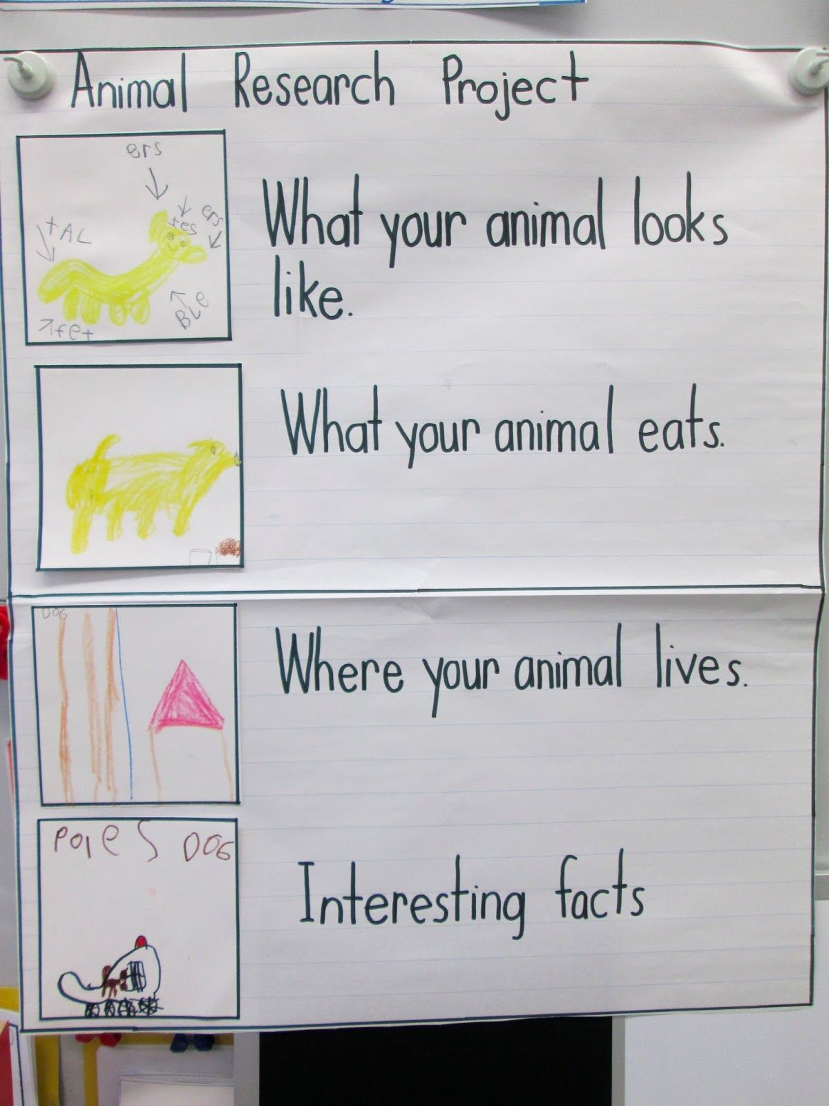 Animal Research Project Anchor Chart