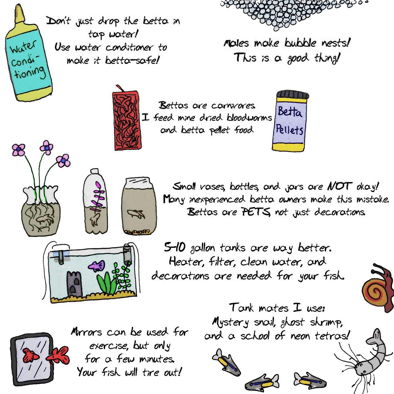 Part 2 Betta Care Tips