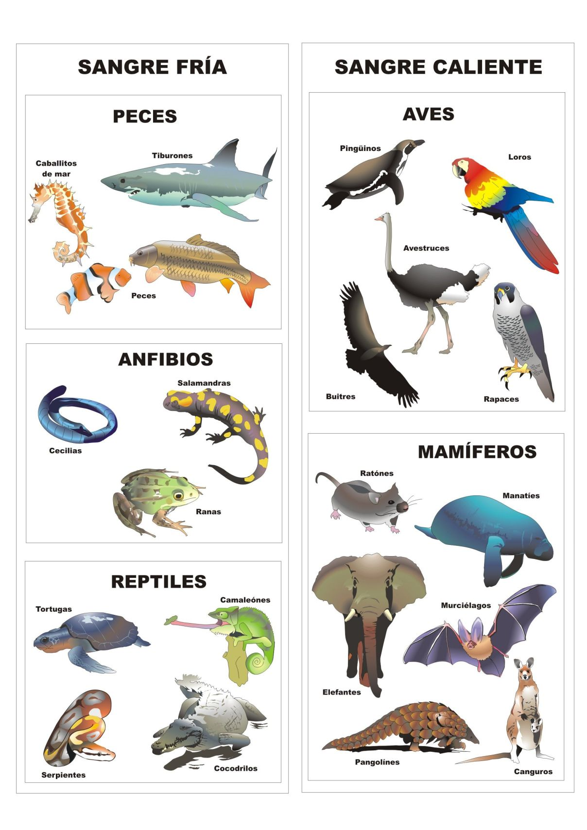 b3c6c24aeb57de253b01829bebee9ef3 - Animales Vertebrados Definición