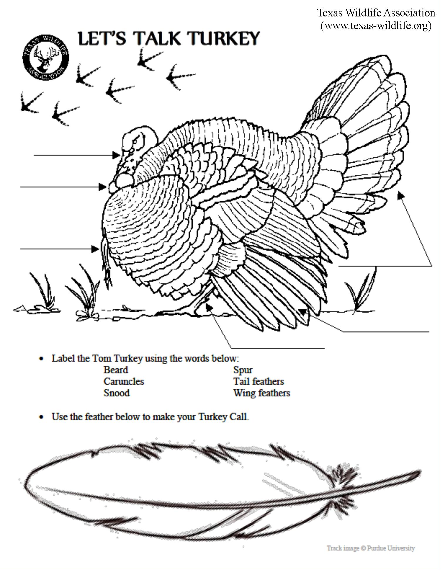 Leaf Anatomy Coloring Worksheet Key | Printable Worksheets ...