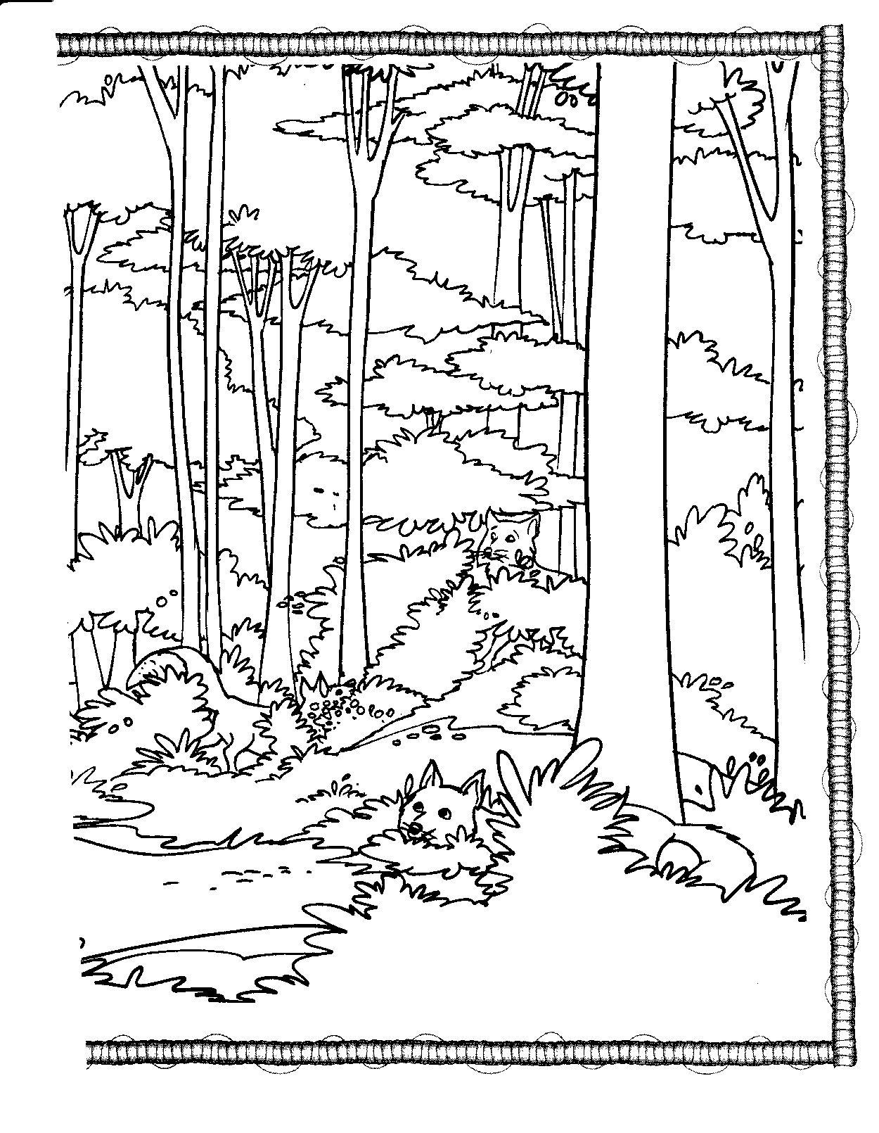 Coloring Book Coloring Habitat Tall Trees
