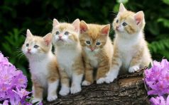 Image result for cats images