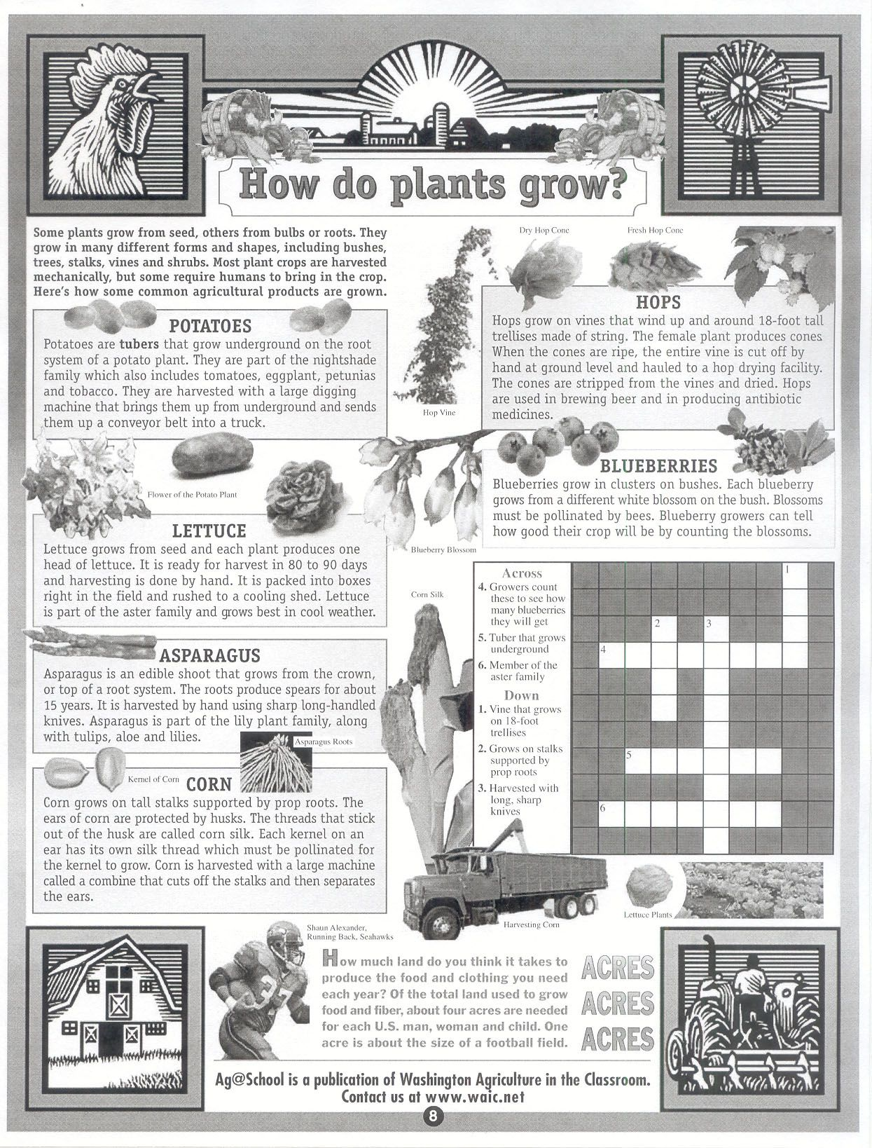 How Do Plants Grow Crossword