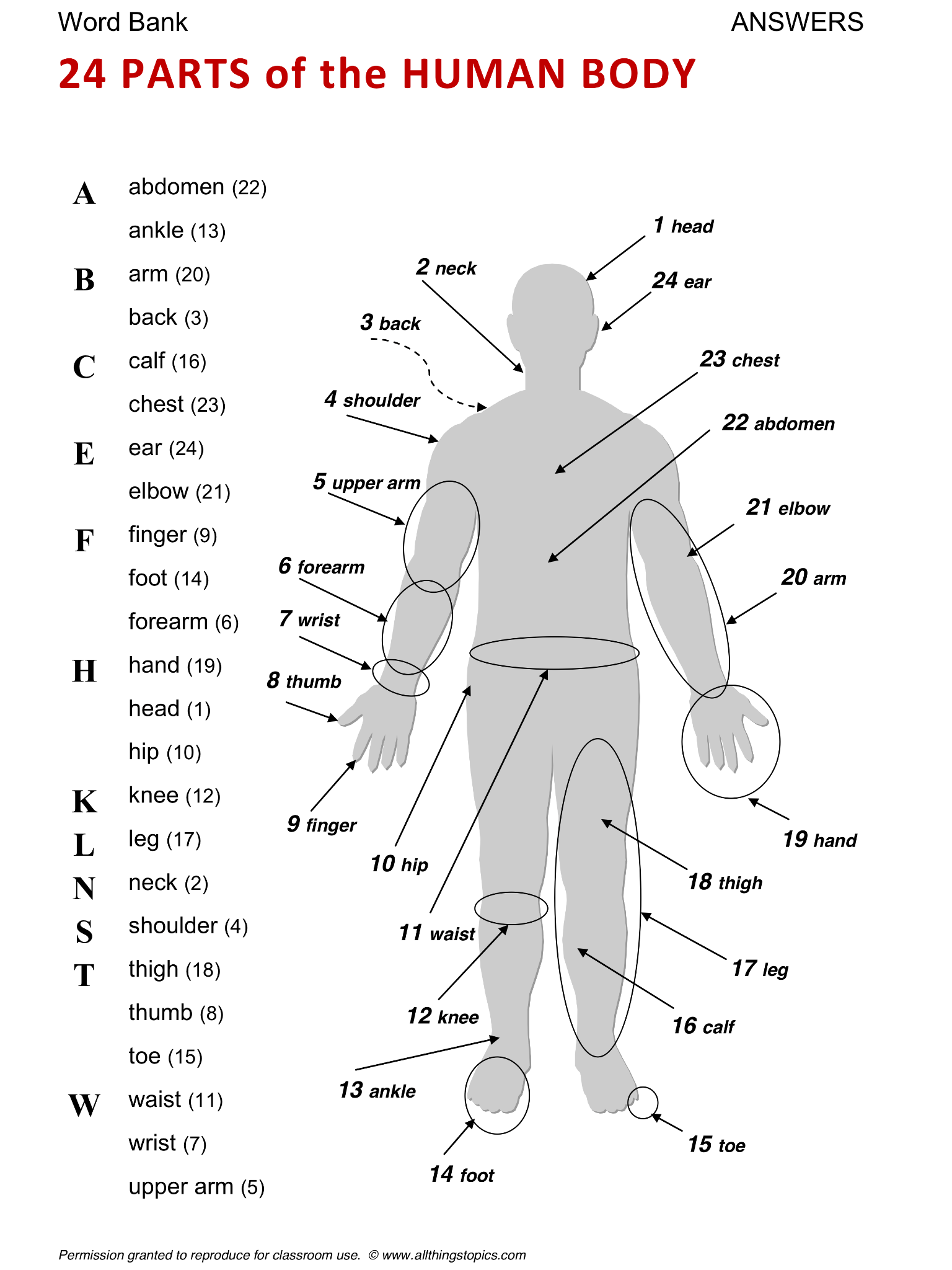 Ant Life Number 5 Worksheet