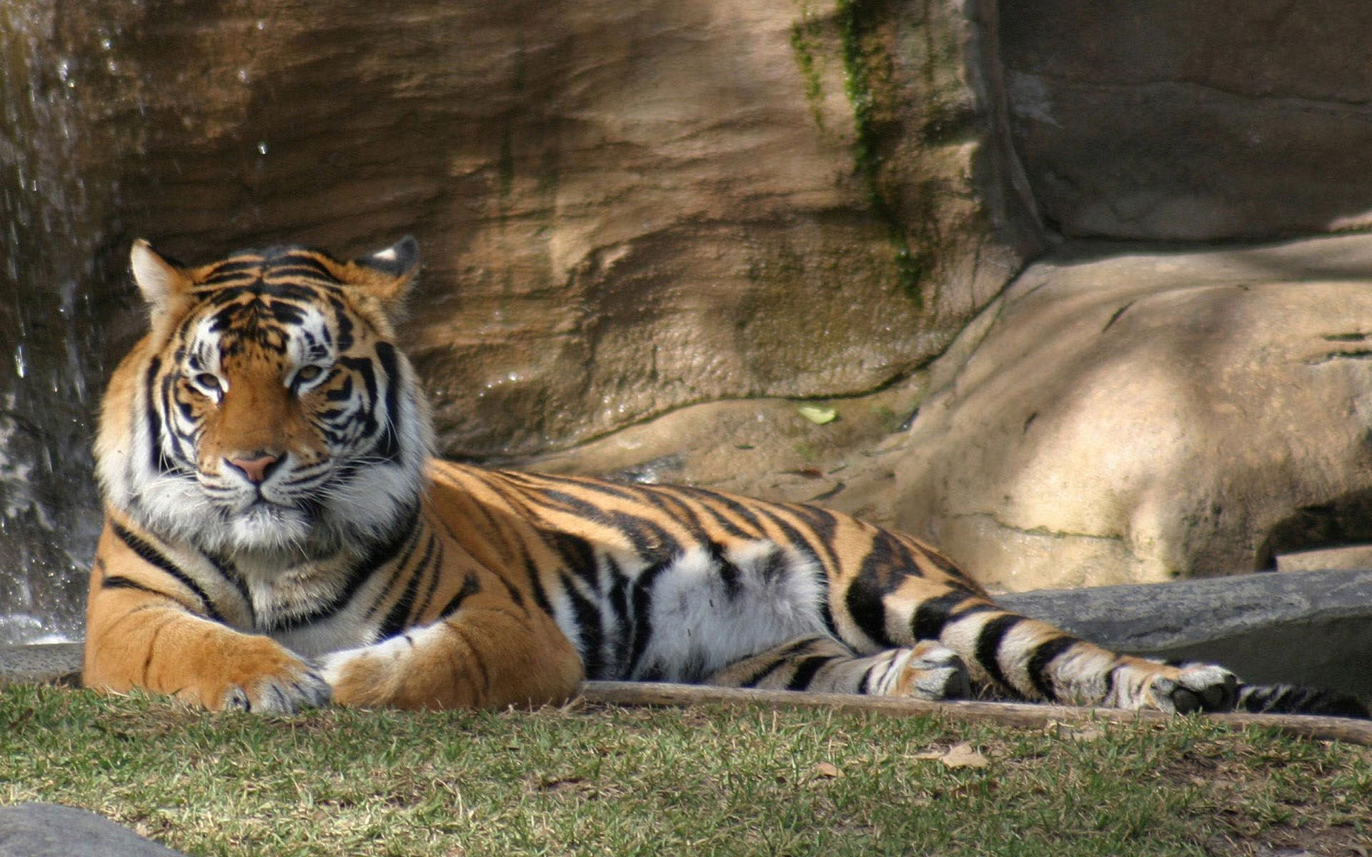 a relaxing afternoon in the sun for this tiger, what could be more