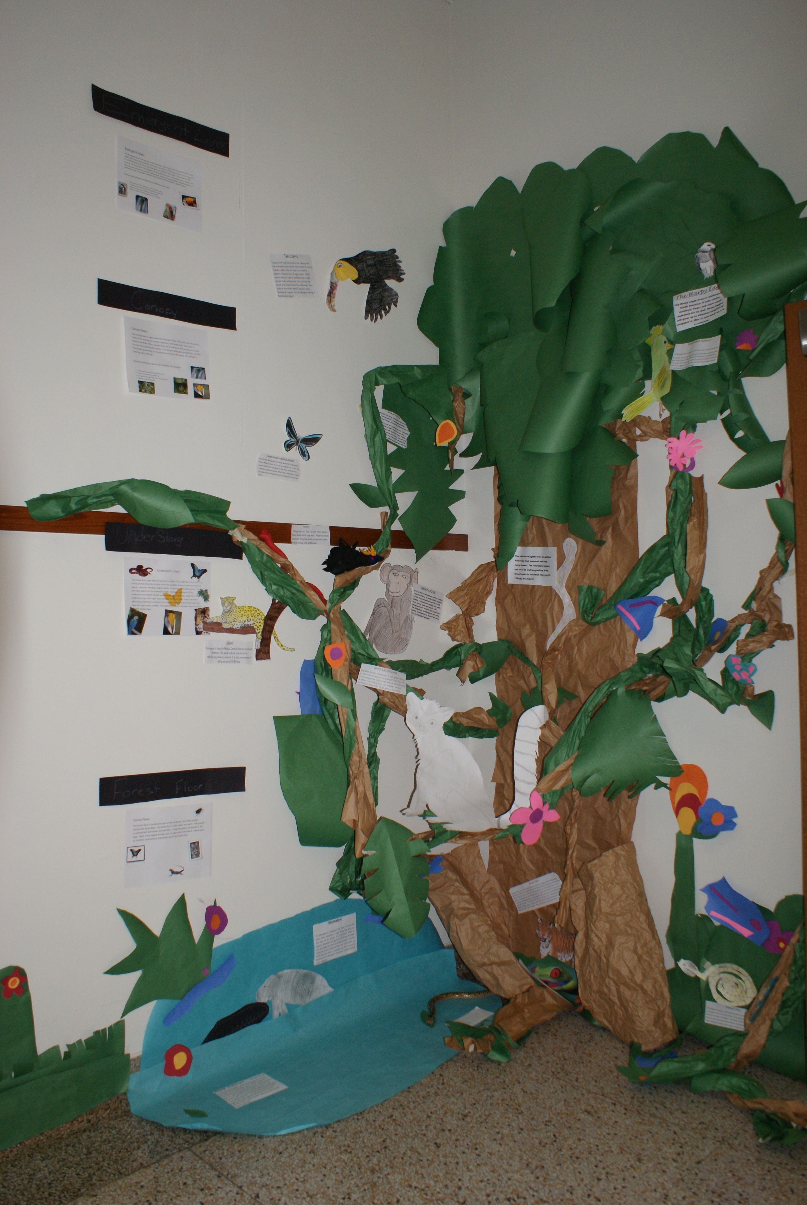 What A Fabulous Way To Show The Different Ecosystems In The Rainforest