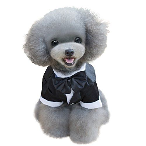 Soft Cotton Blend material keep your puppy more comfortable     Explore these ideas and more