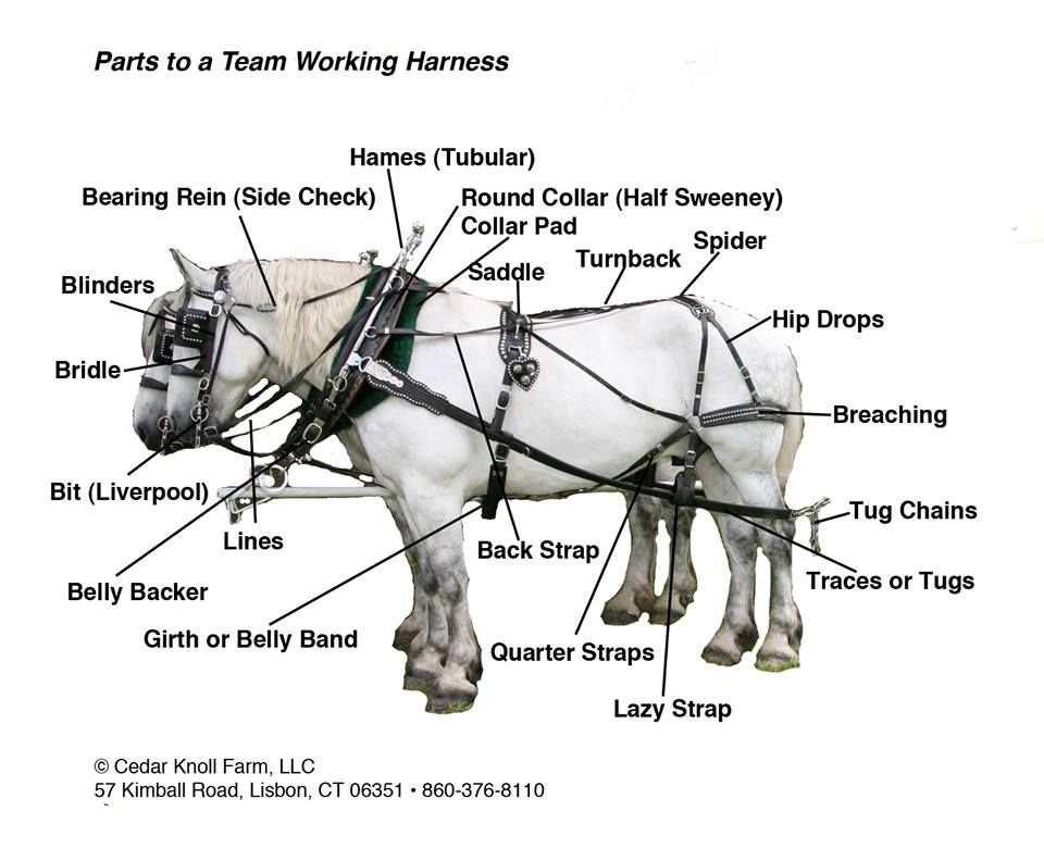 Parts To A Team Harness From Cedar Knoll Draft Horses