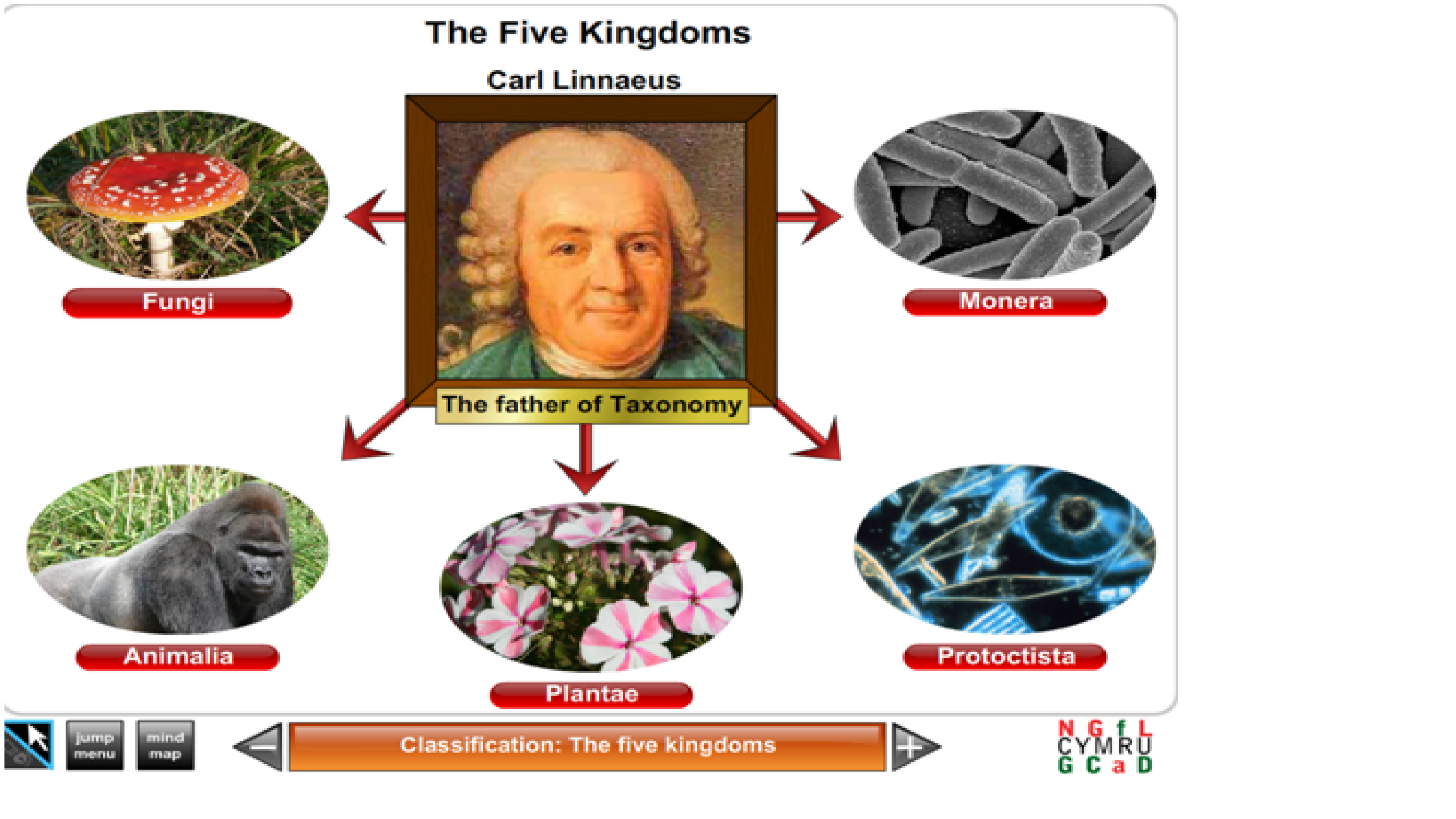 Biology Classification The Five Kingdoms