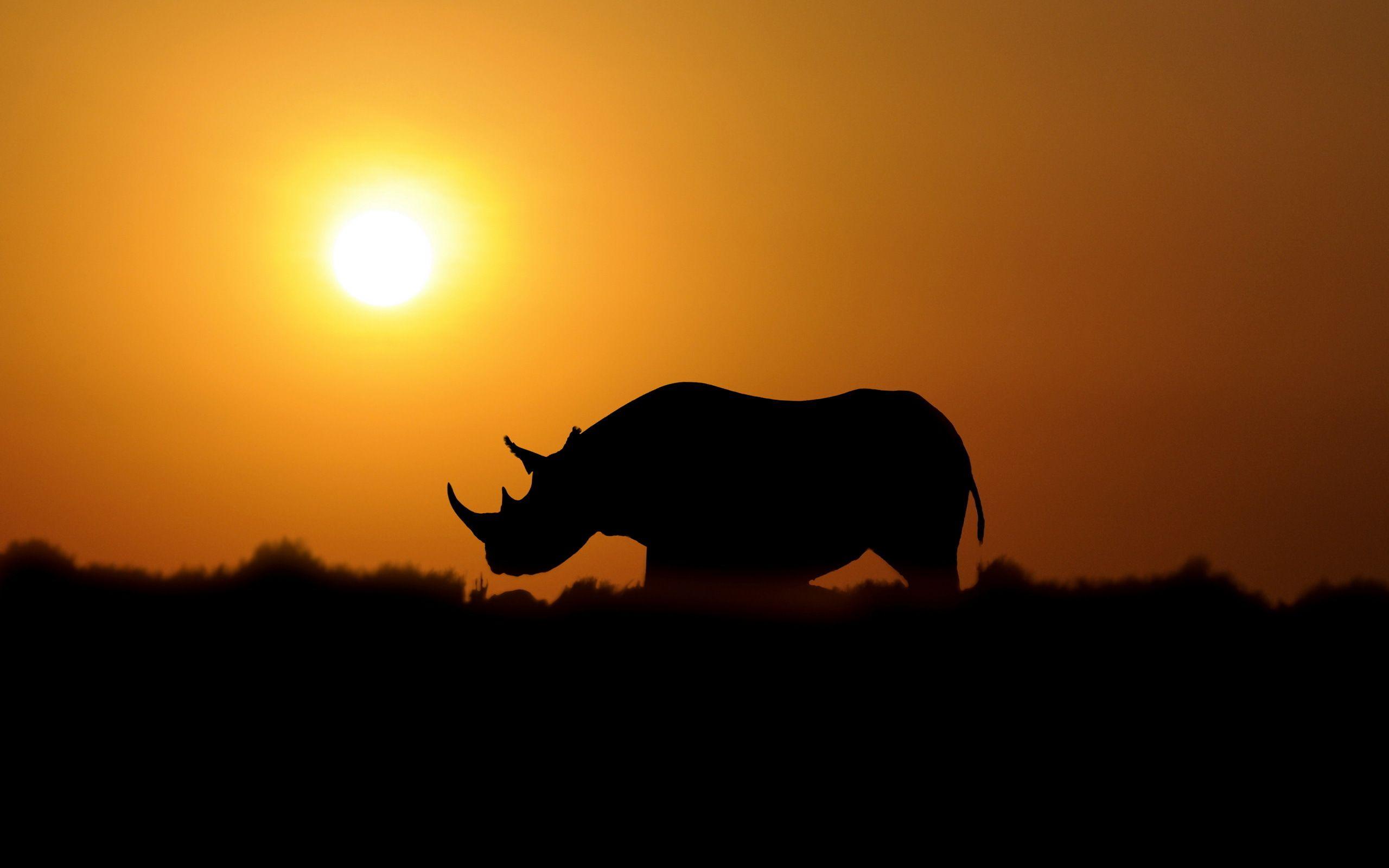 utv desktop wallpaper images - yamaha rhino forum - rhino forums