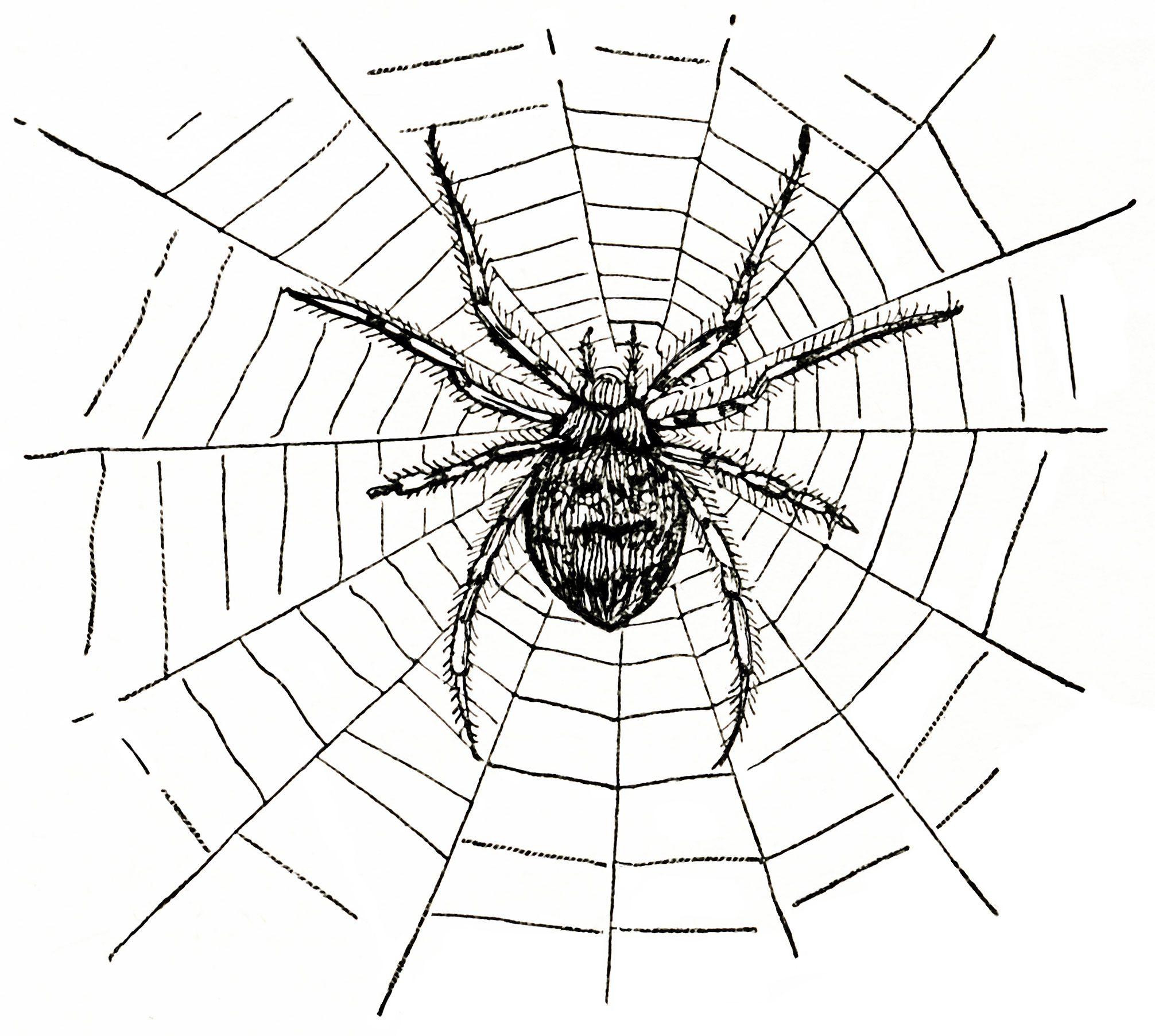 Old Design Shop Free Digital Image Spider And Spiderweb