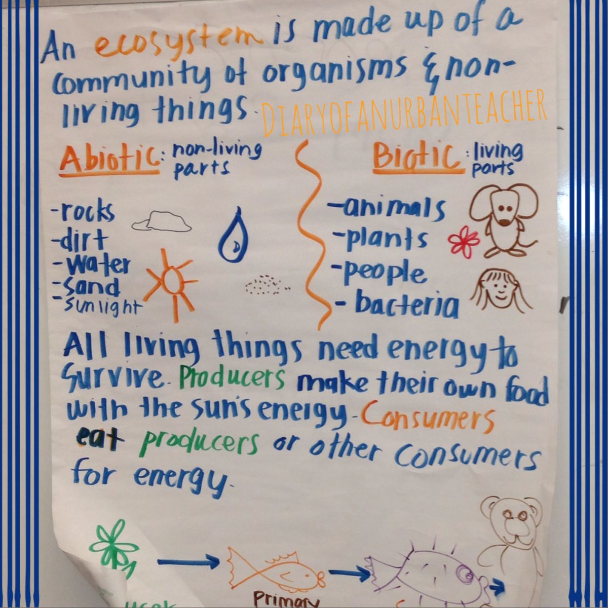 Science Anchor Charts