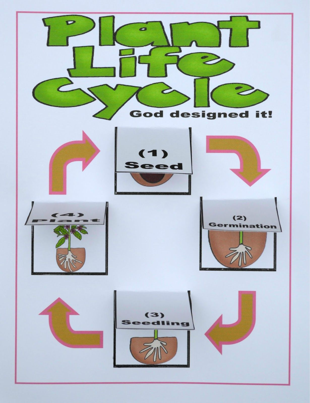 You Can Print The Lift The Flap Plant Life Cycle Chart To Print
