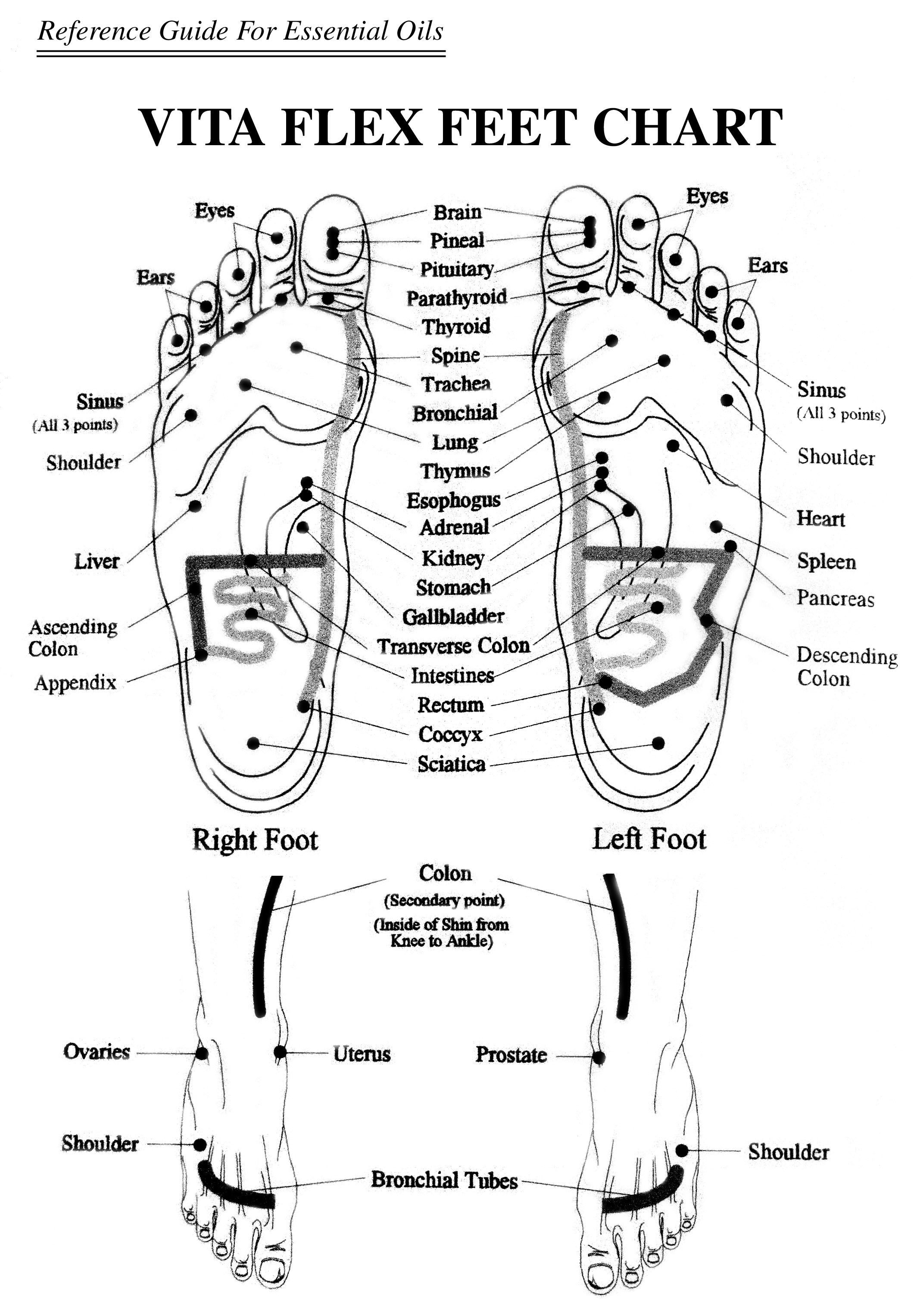 Foot Chart For Reflexolgy And Essential Oil Reference