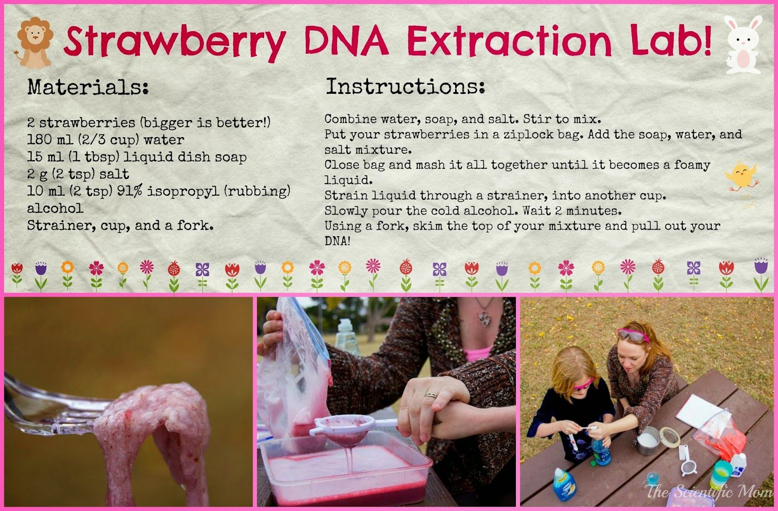 Sweet Science Strawberry Dna Extraction Lab This Is One