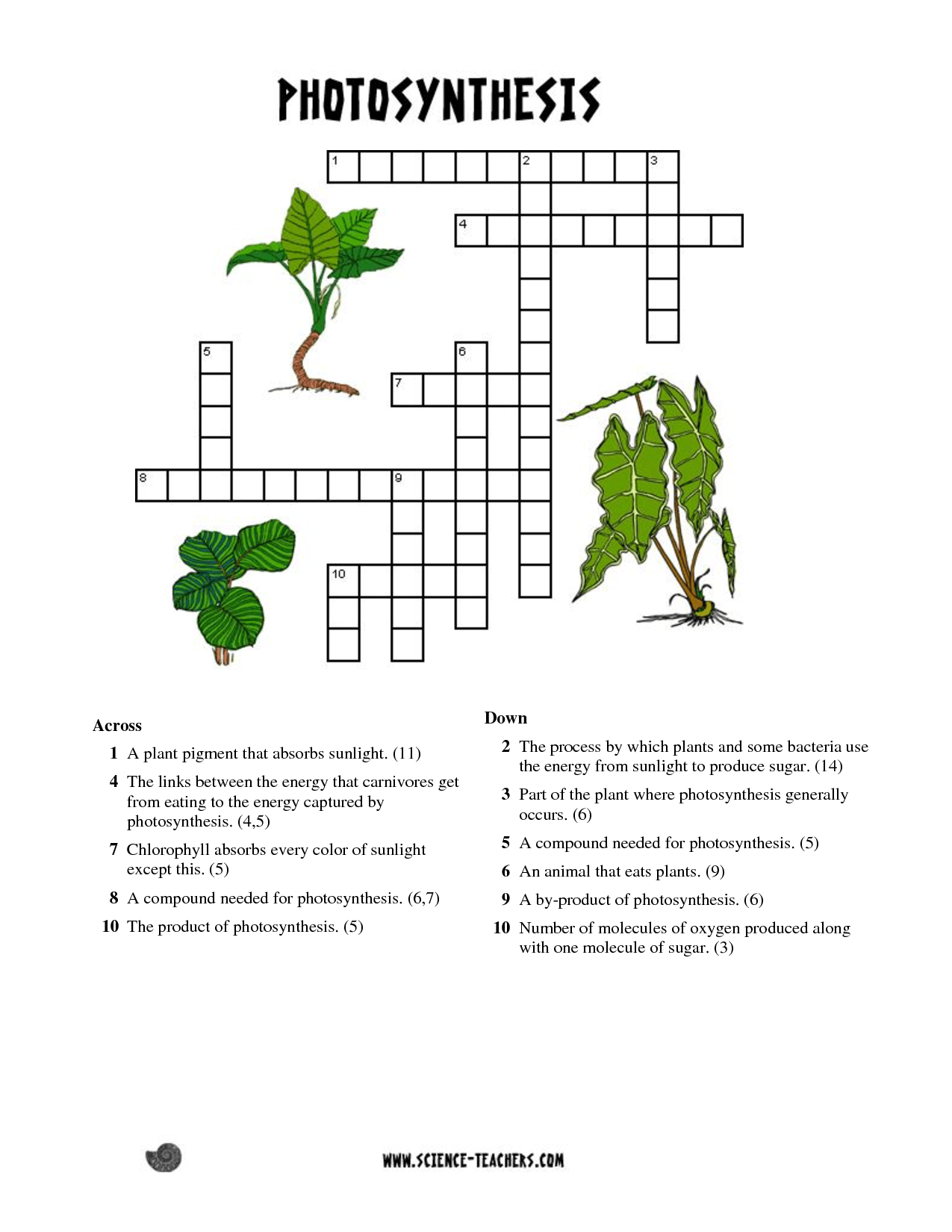 Printable Photosynthesis Crossword