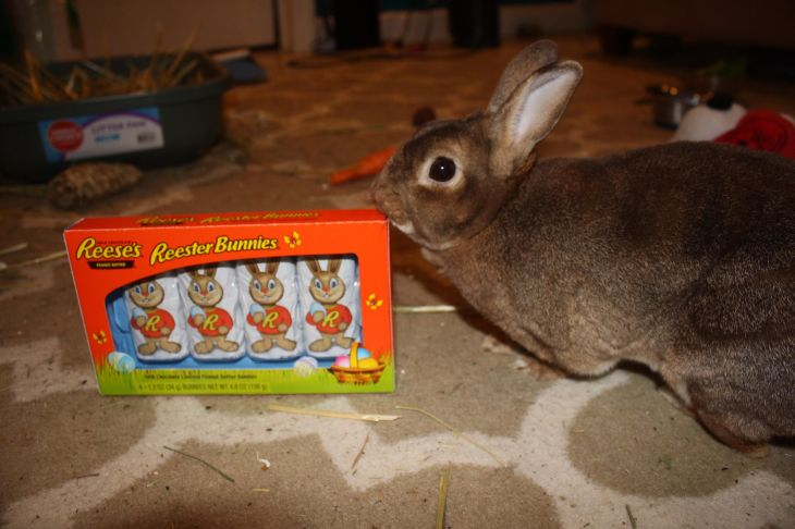 My Easter bunny iftujVV Rabbits Pinterest Easter