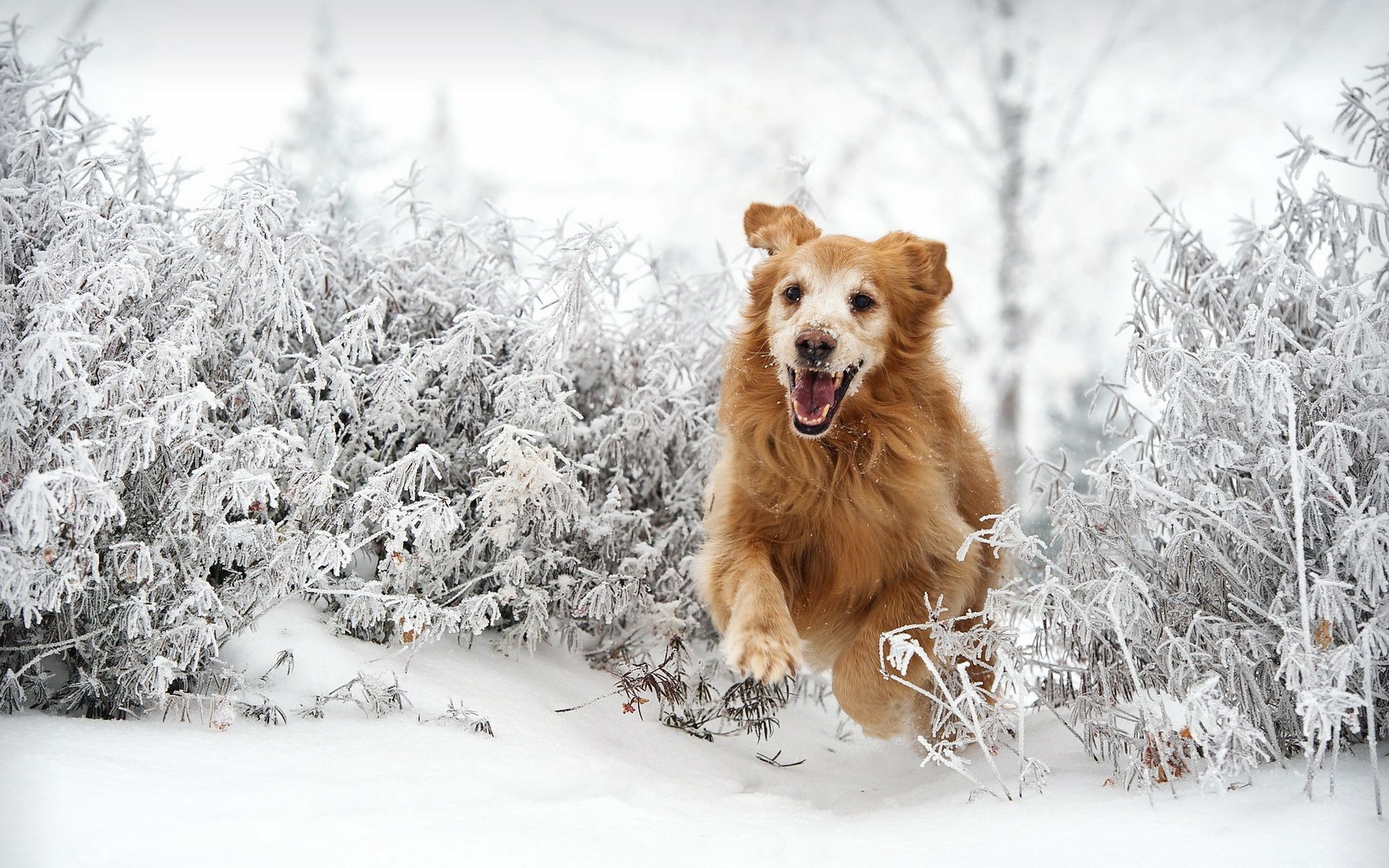 keeping dogs exercised an entertained through the winter   pet