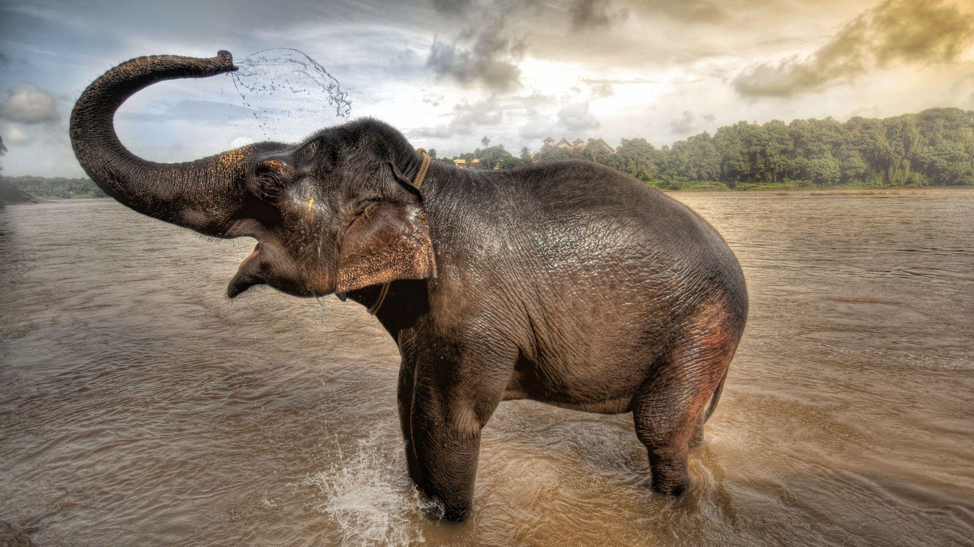 elephant wallpaper hd 1080pelephant wallpaper hd 1080p, 1920 x