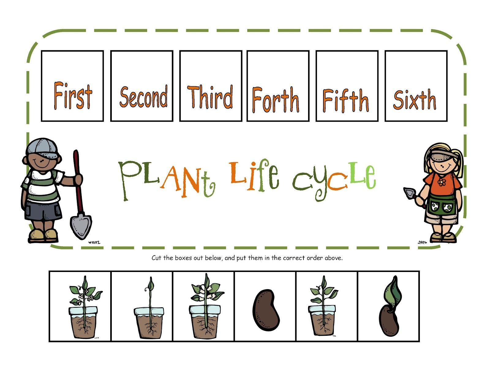 Preschool Printables Plant Life Cycle Printable