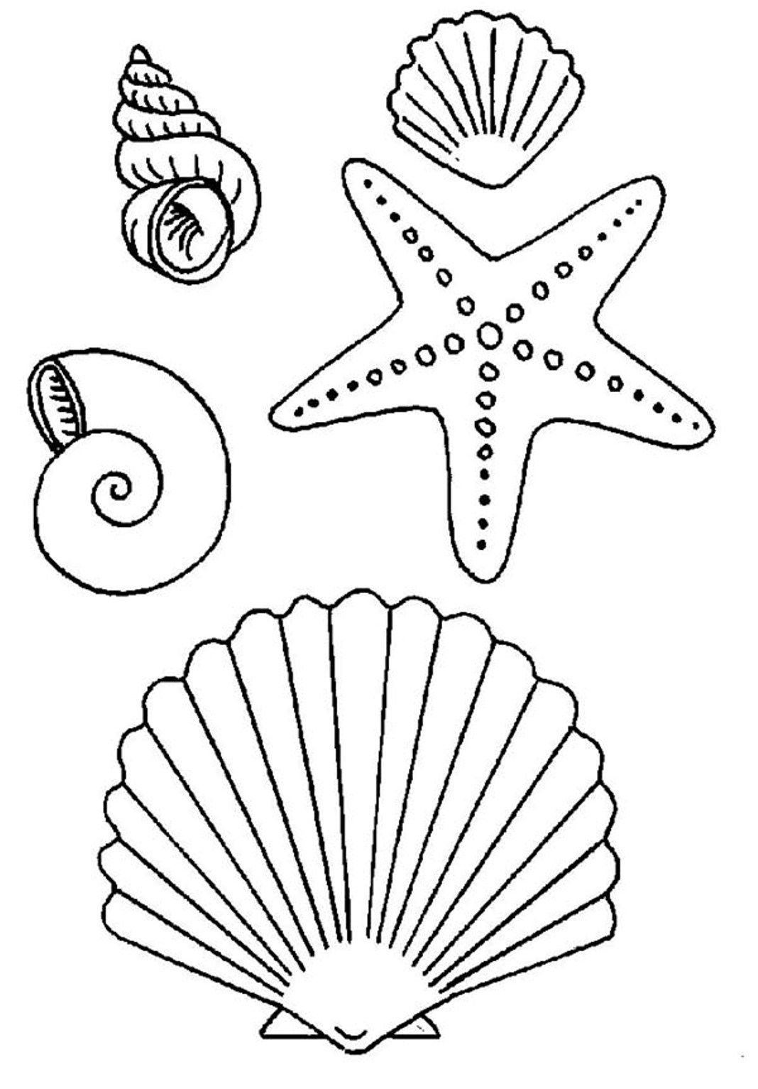 Images For Gt Simple Seashell Drawings