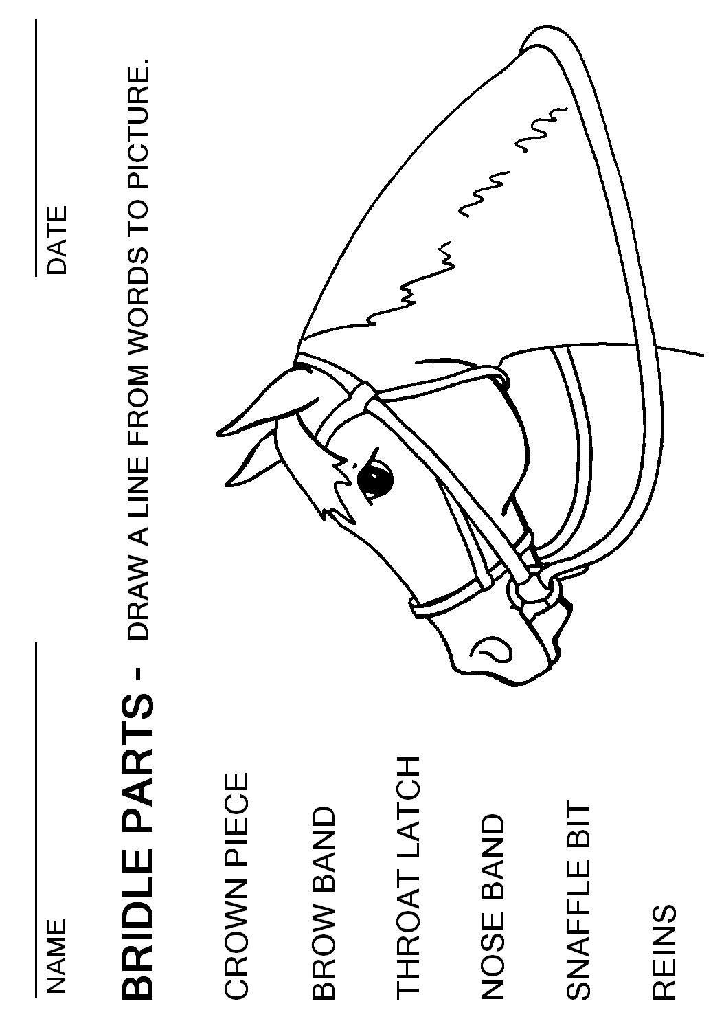 Booklet Pg 16