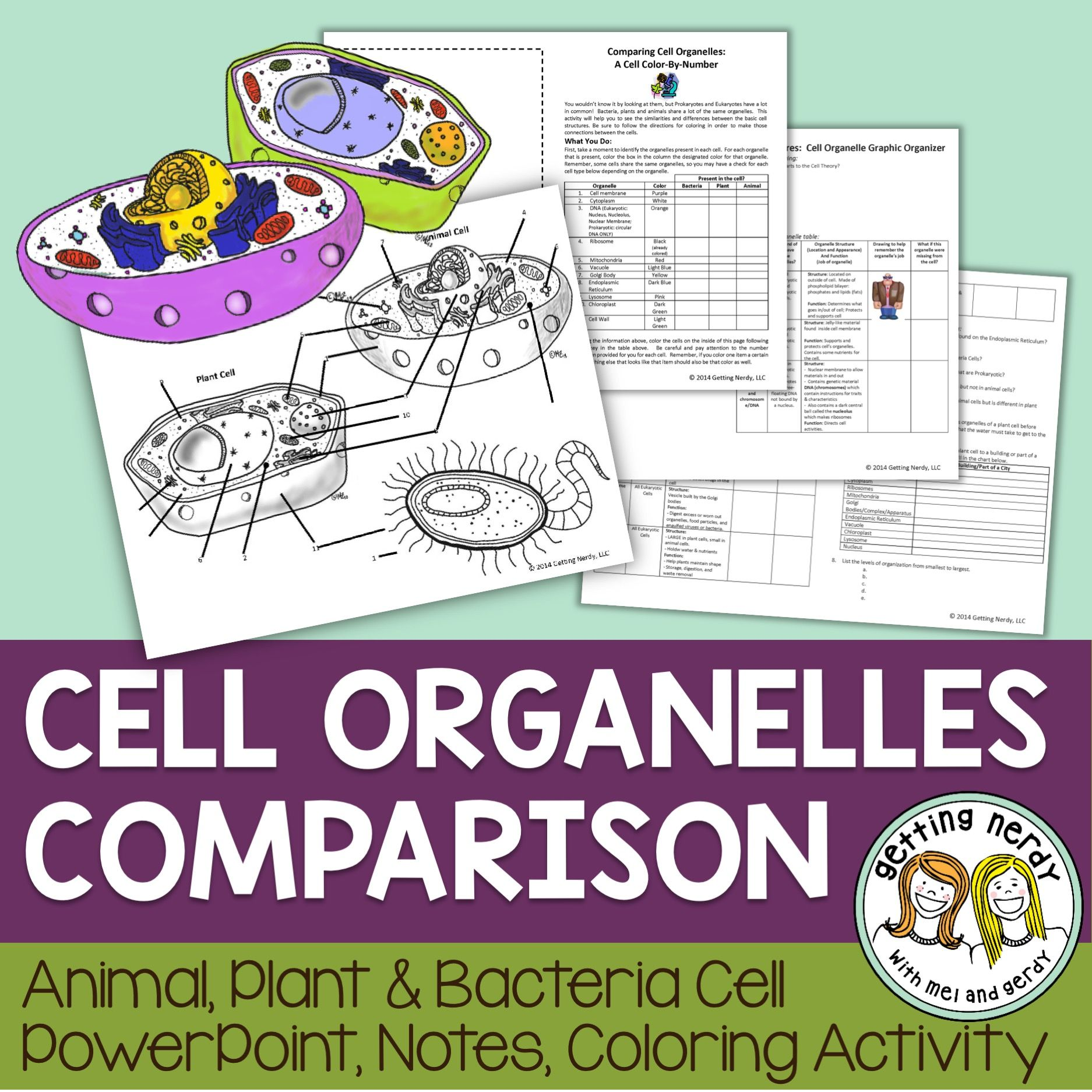 Cell Organelle Structure Amp Function