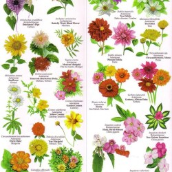 Names Of Spring Flowers Charts Gardening Flower And Vegetables