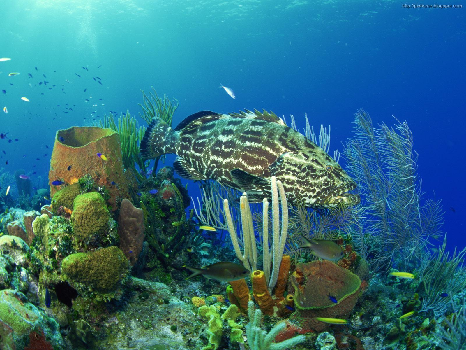 Underwater Sea Animal Creatures Plants Pictures Hq
