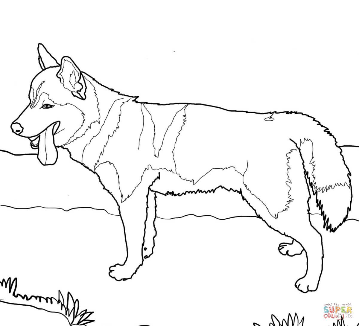 Dog Sled Racing Coloring Pages
