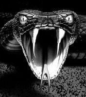 Image result for viper snake
