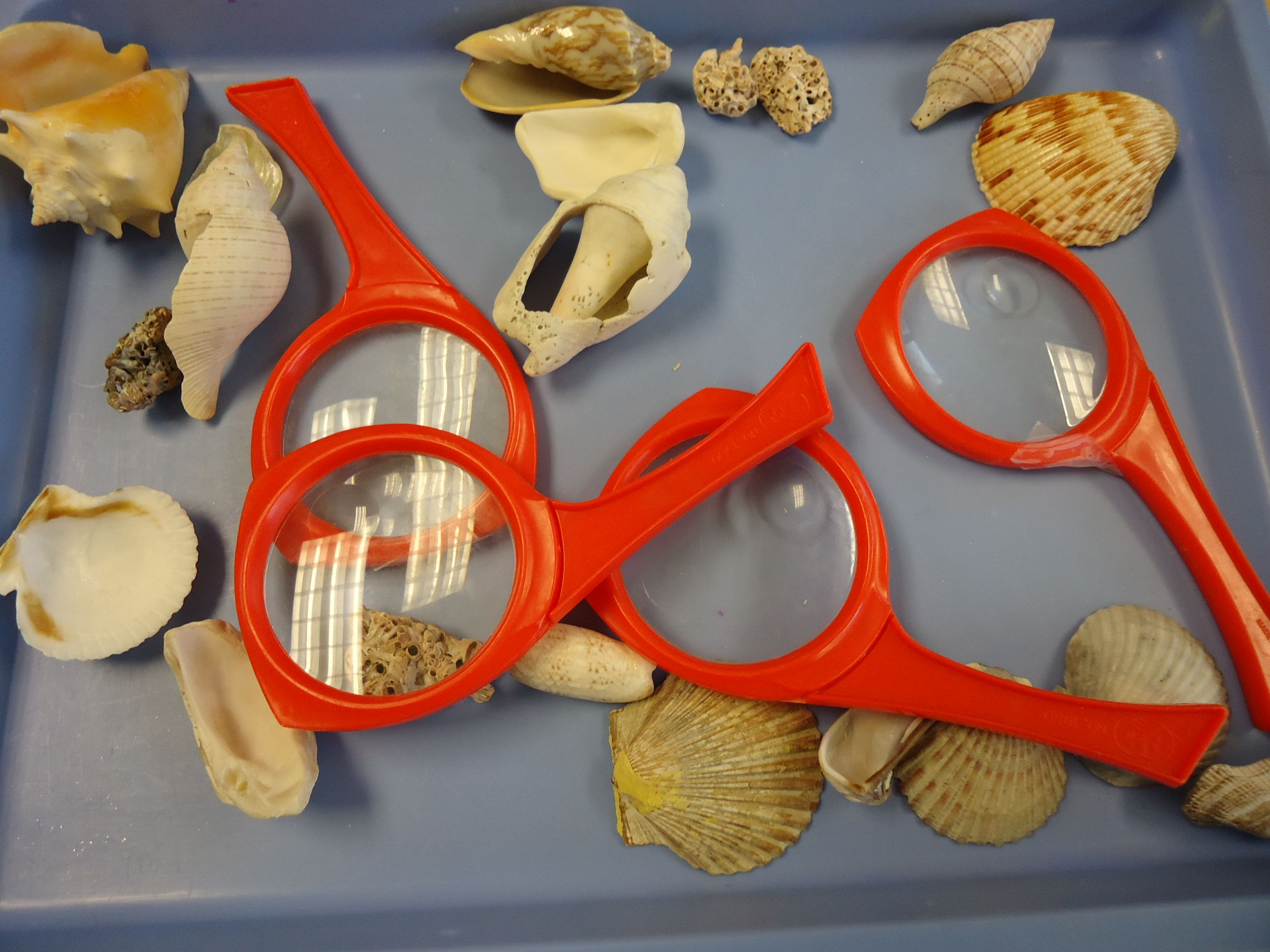 Under The Sea Science Activity We Let Children Explore Shells In A Variety Of Ways In Our