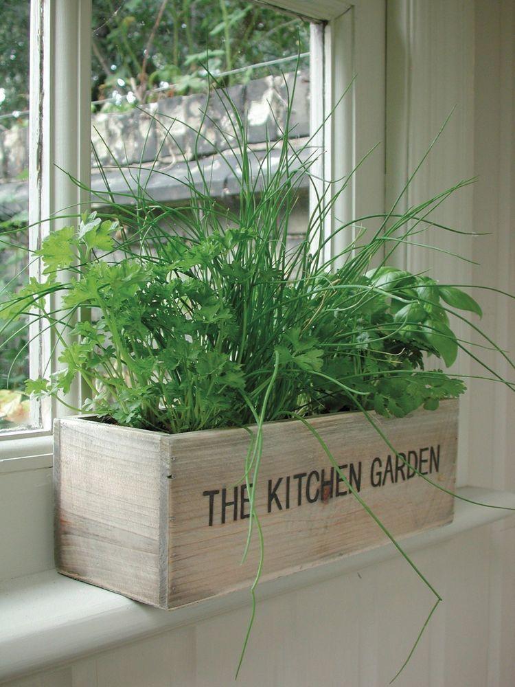 unwins herb kitchen garden kit planter pot seeds flower indoor outdoor flower ebay pinterest on outdoor kitchen herb garden id=52810