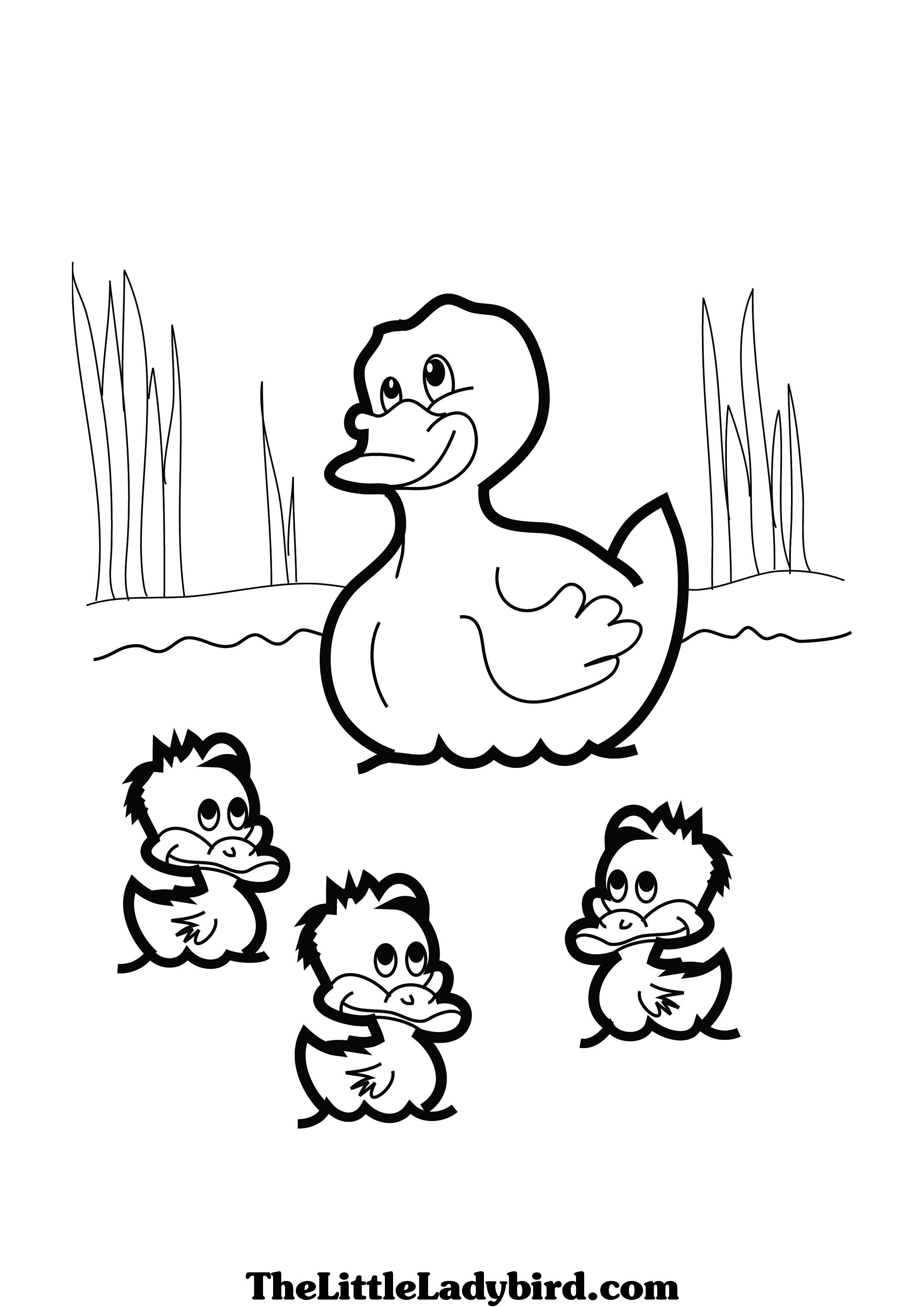 Duck Colouring Picture