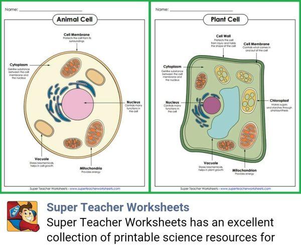 https://www.superteacherworksheets.com/m/?s=full-science ...