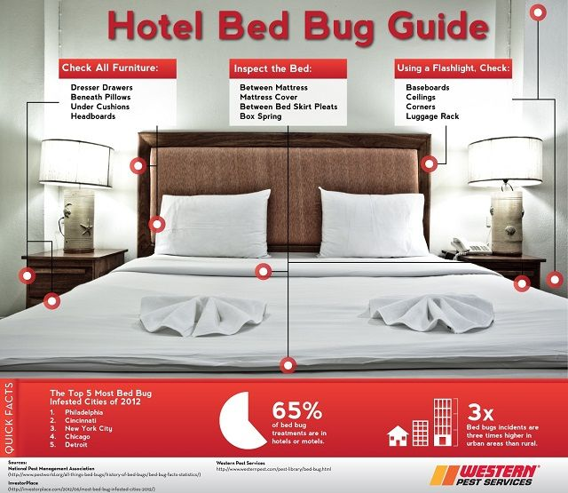 Hotel Bed Bug Guide How To Spot Bedbugs In Room