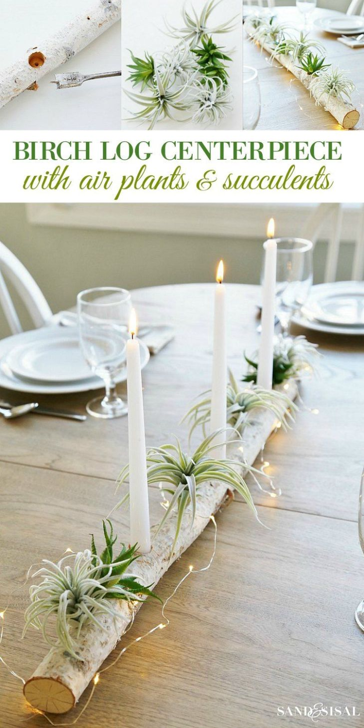 Birch Log Centerpiece with Air Plants and Succulents  Air plants