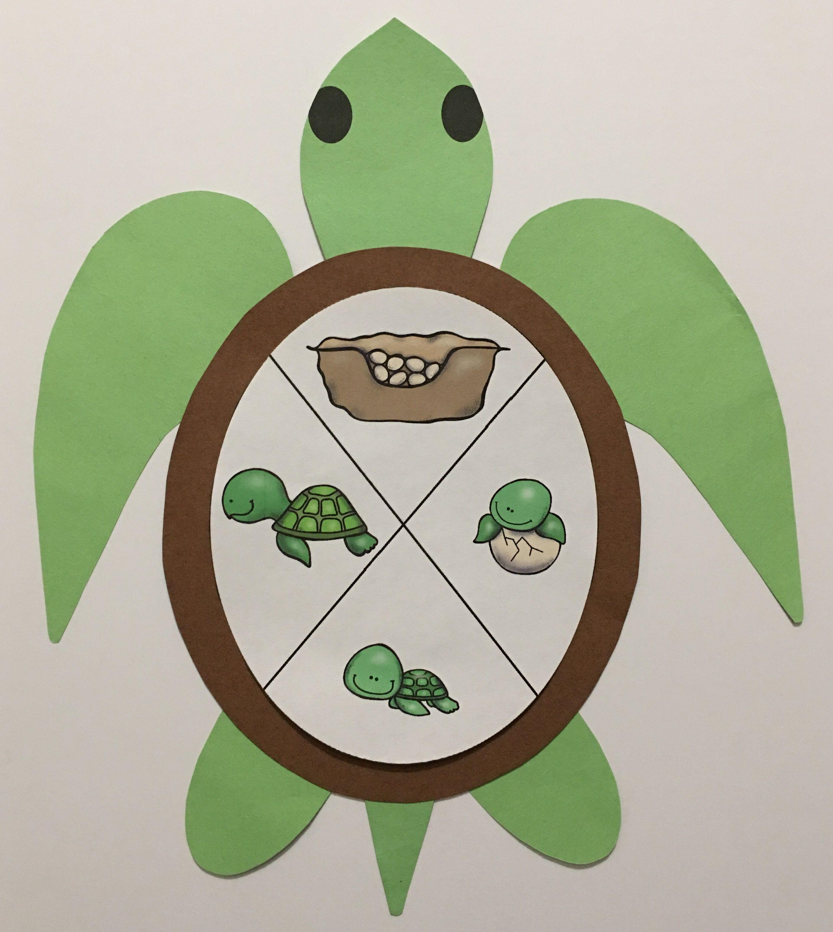 Sea Turtle Life Cycle Craft