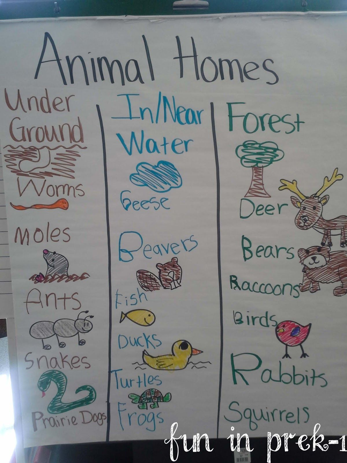 Fun In Prek 1 A Picture Palooza Of Animal Homes Amp Life
