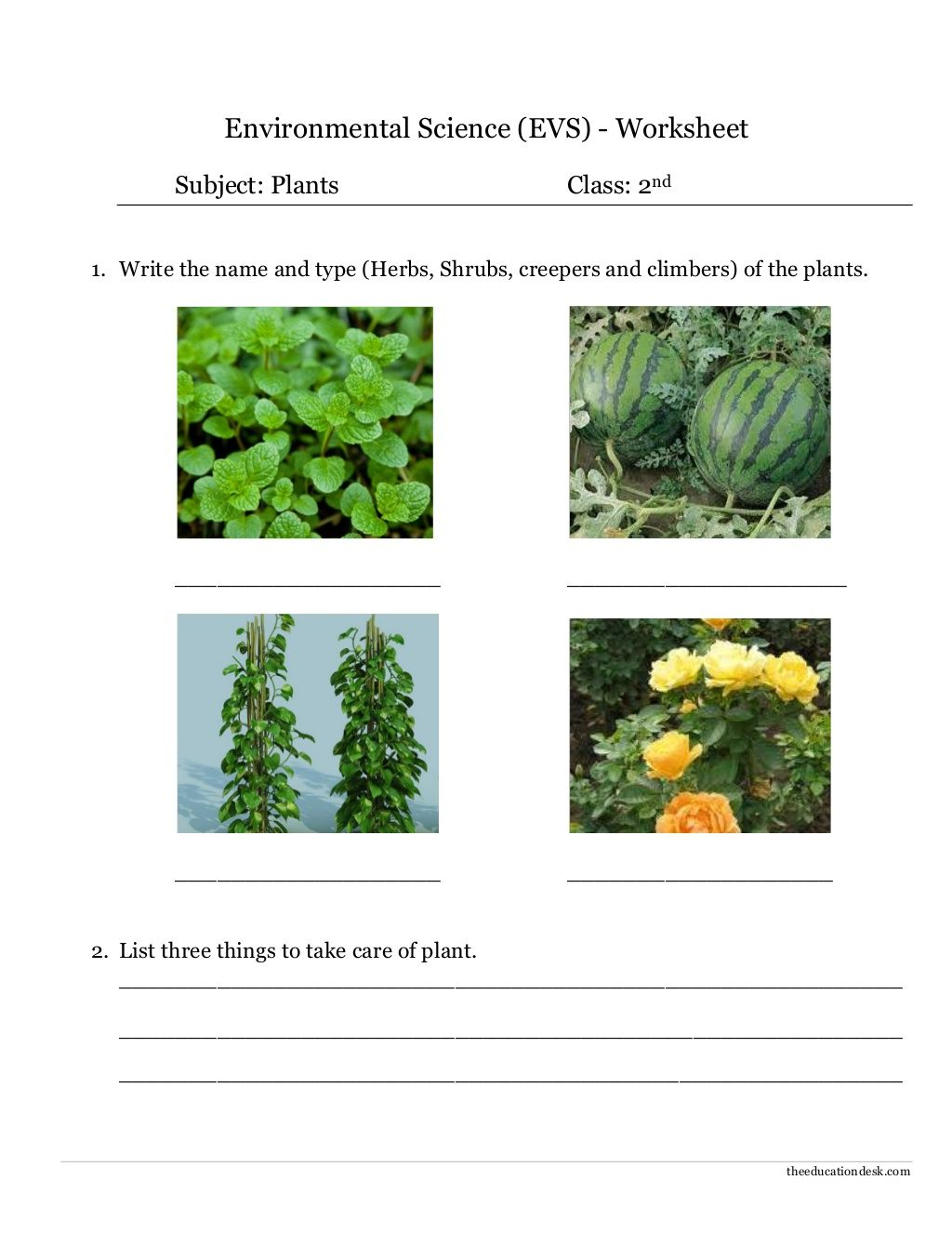 Environmental Science Evs Plants Worksheet Class Ii