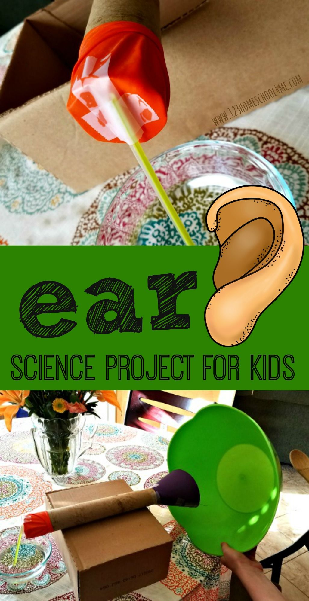 Ear Anatomy Science Project