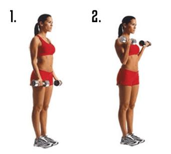 Image result for Dumbbell Biceps Curl