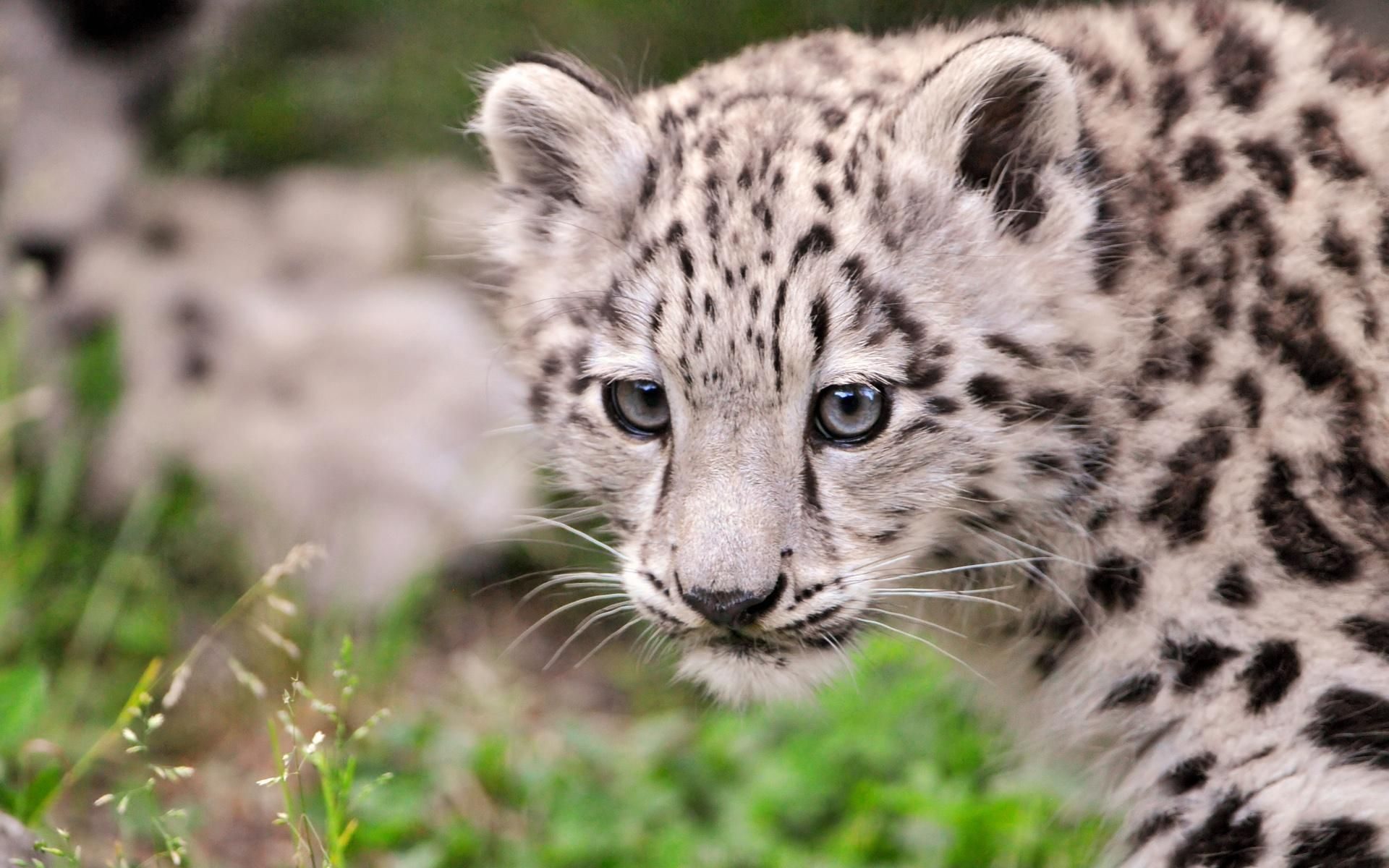 bright leopard wallpapers and images wallpapers pictures photos