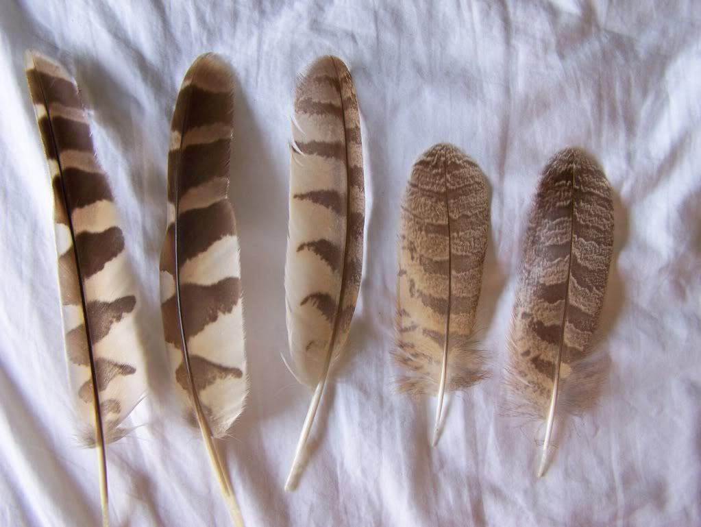 best 25+ owl feather tattoos ideas on pinterest | feather arrow
