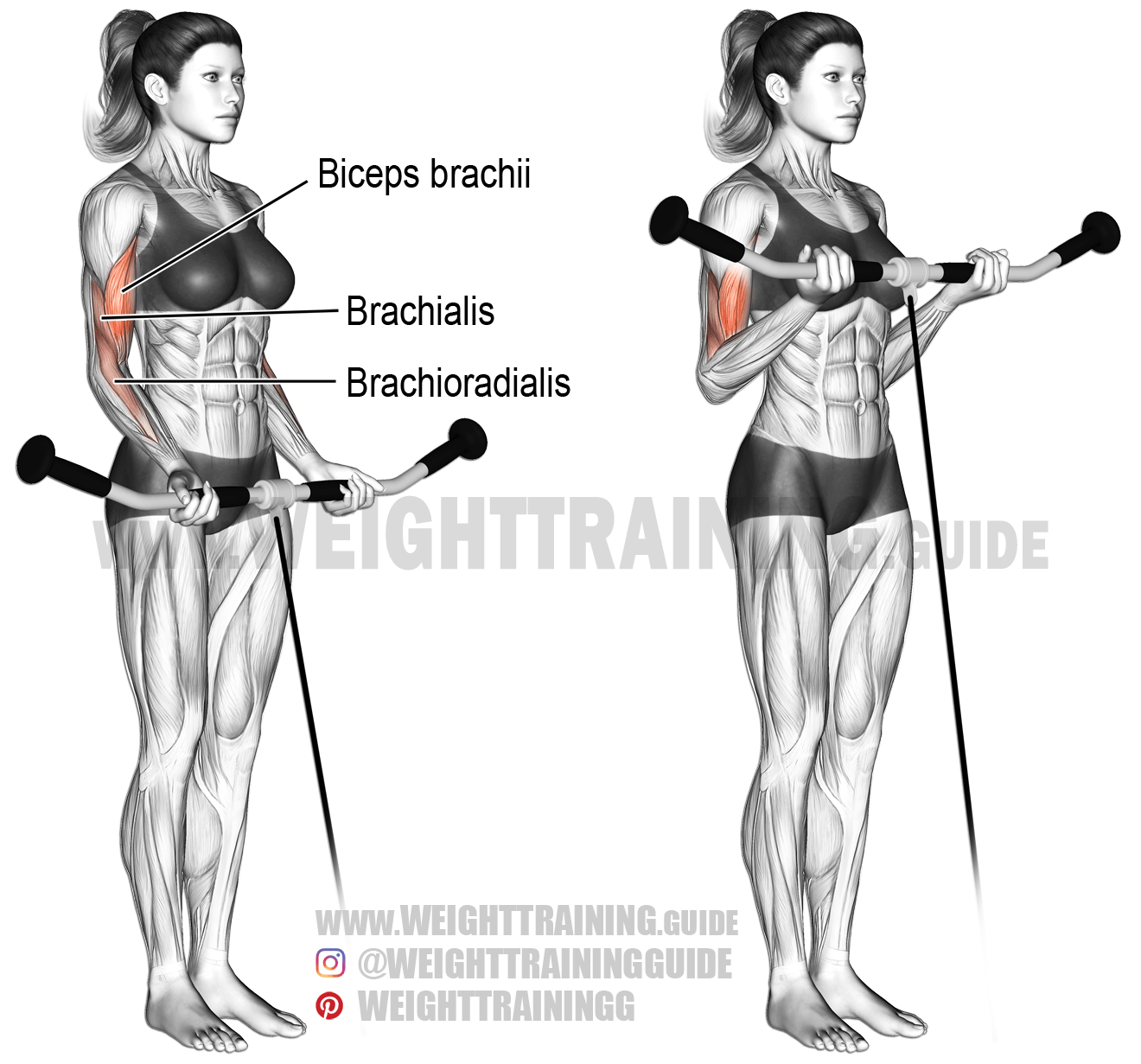 Cable Curl An Isolation Exercise Target Muscle Biceps