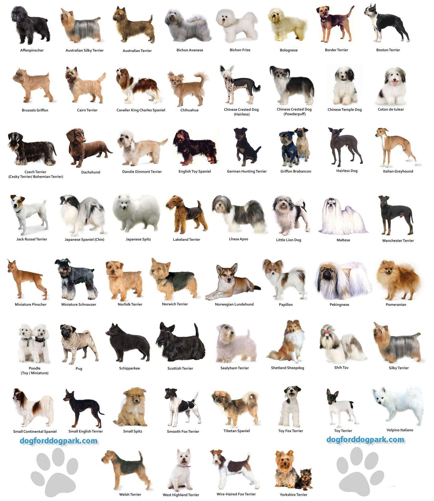 Small Dog Breeds Chart