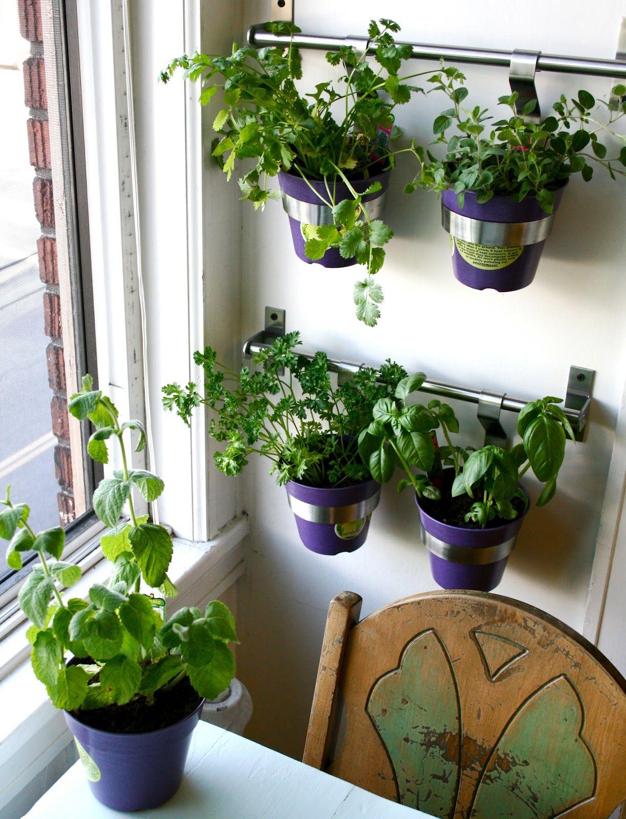 charming minimalist kitchen room design cute kitchen window herb garden with modern silver rack on kitchen garden id=76324