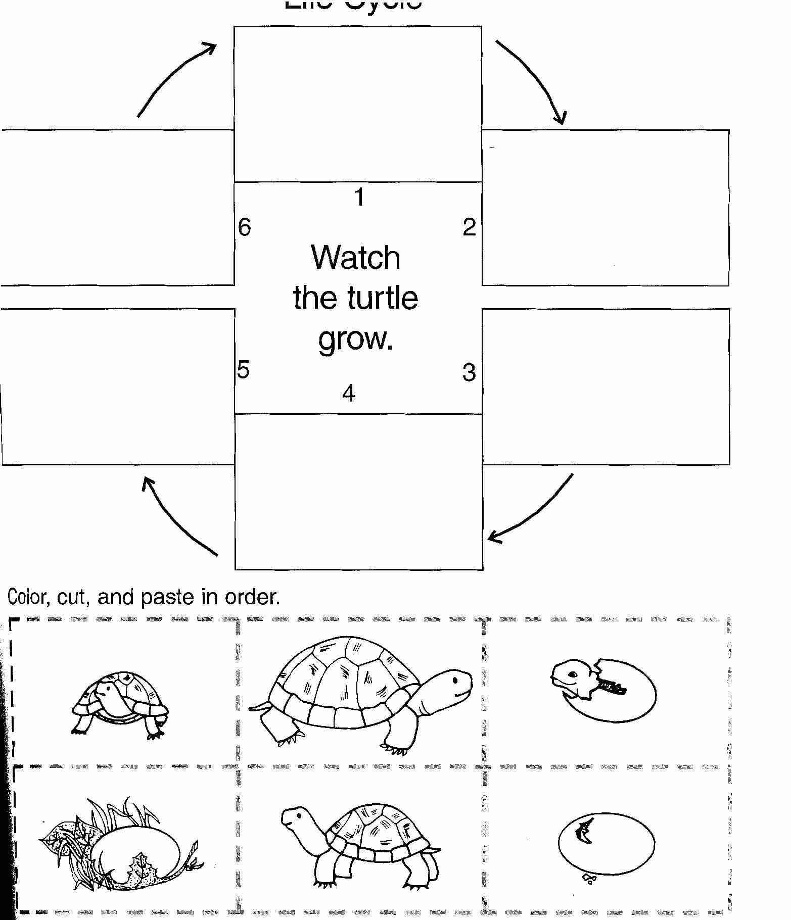 Coloriage Tortue