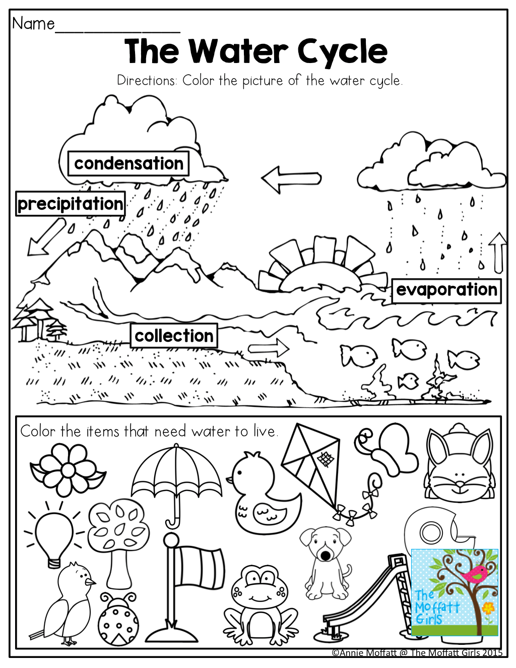 Amazing Water Activities Worksheet The Life Cycle Of A